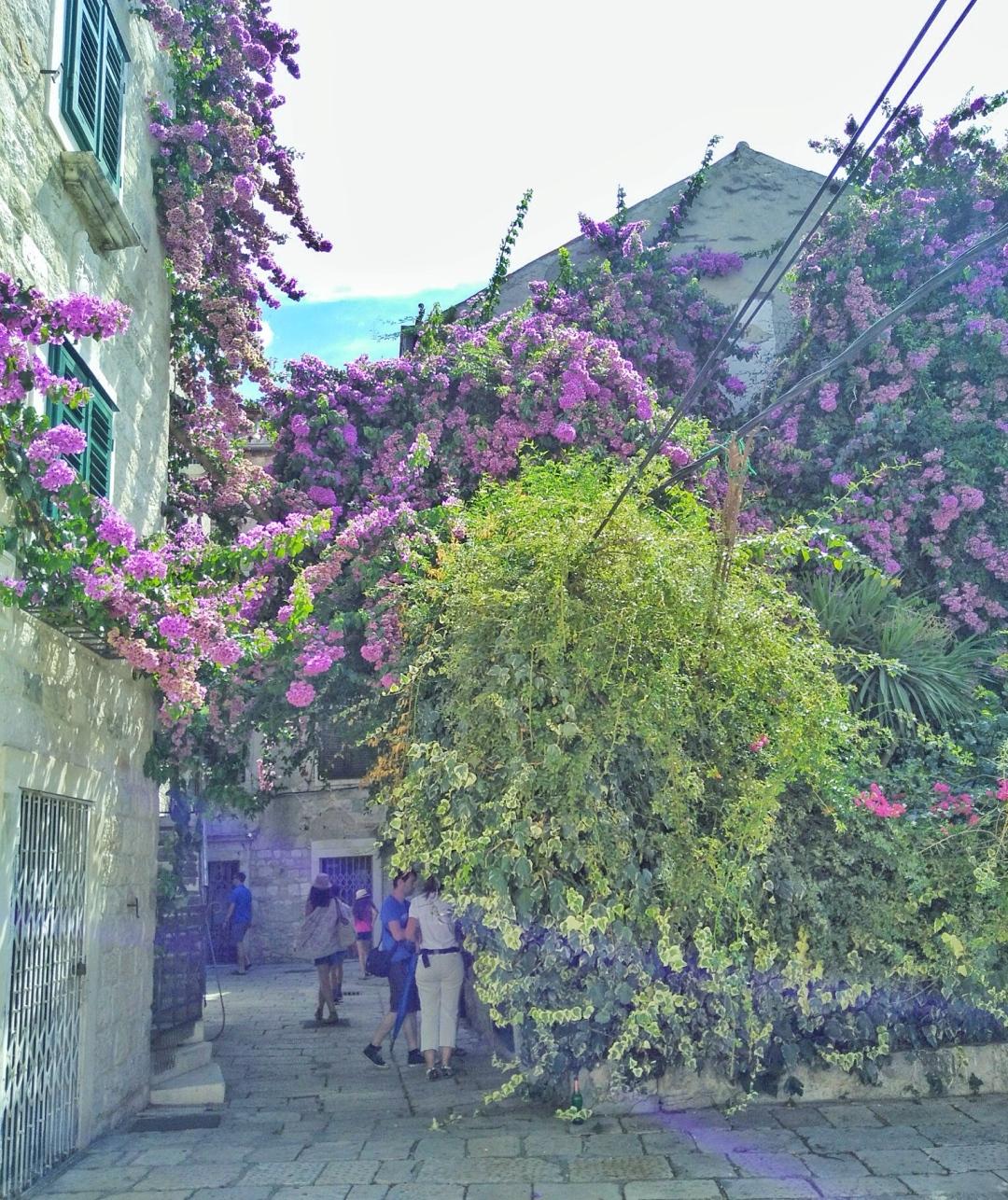 lavender-croatia